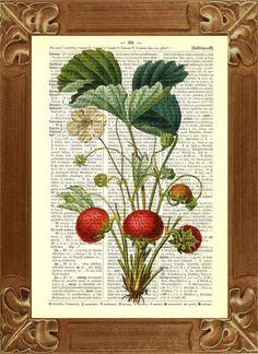 Vintage  Strawberries Print Botanical illustration