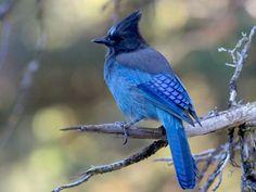 © Doug Sonerholm, Alaska, September 2012, https://www.flickr.com/photos/43065226@N04/8666544935/