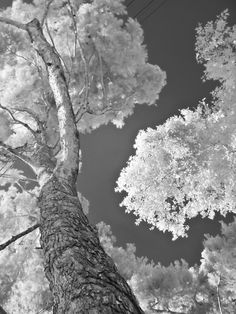 How to edit Infrared Photography