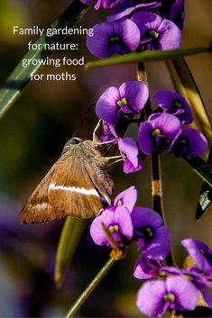 Give nature a home in your garden with this easy guide to growing plants for moths & the RSPB Big Wild Sleepout - perfect family nature activities.