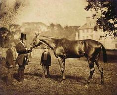 """This is one of the oldest pictures of a Thoroughbred ever taken. The horse is Wild Dayrell, born 1852. This picture was taken when he was a 3 year old in 1855. He is only six generations from Herod and eight from the Godolphin Arabian. Wild Dayrell was a big, powerful brown horse standing 16.1 hands high and described as """"one of the finest specimens of a racehorse"""" ever seen."""