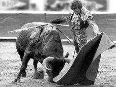 ganaderías mexicanas toro de lidia   Manolo Martínez sigue siendo el mandón (Con fotos)
