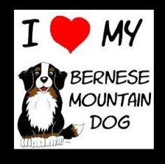 bernese mountain dog facts - Google Search