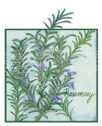 Herbs Rosemary