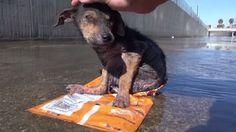 La cruauté est malheureusement encore présente dans notre monde. Mais heureusement, la bonté aussi ! Et cette dernière surpassera toujours la cruauté humaine. Ce chien a failli mourir à cause de ses bourreaux, mais des êtres au très grand cœur l'on sauvé ! Émouvante histoire !