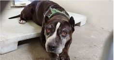 She was given the perfect name when they adopted her 11 years ago, SWEETIE, because she is pure love. Today they brought her back to the shelter at almost 12 yeas old and she is just completely heartbroken. She deserves so much better. Please SHARE this very special senior, she mas so much life and love left inside. A FOSTER or Adopter would save her beautiful life. Thanks!  #A3262507 My name is Sweetie and I'm an approximately 11 years, 9 month old female pit bull. I am not yet spayed.