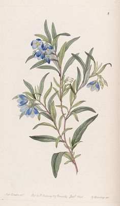Edwards's botanical register.. London :James Ridgway,1829-1847..