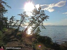 "просто фото ""И еще один шикарный снимок от @antoninabusaeva -  Озеро Хвалисекое #озеро #природа #лето #сахалин #сахалинскаяобласть #lake #nature #summertime #sakhalin_online #sakhinsta #sakhalin #sakhisland #sakh_island #ostrov_sakhalin #insta_sakh #fareast_sakh #fareast_russia #realsakh "" от realsakh May 23 2016 at 04:57PM"