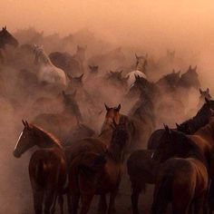 Kayseri Hürmetçi'de Yılkı atlarının çekildiği bu fotoğraf 10. Natıonal Geographic Türkiye fotoğraf yarışmasında doğa katagorisinde ön elemeyi geçmeyi başarmış! #Fotoğraf #Photography #Kayseri #Hürmetçi #Türkiye #Turkey #National #Geographic