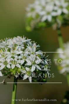 Keep an eye out for Britain's woodland wildflowers when out and about in the countryside during spring and summer: Small White Flowers, Yellow Flowers, Cuckoo Pint, Wood Anemone, Wood Sorrel, Strawberry Plants, Wild Strawberries, Purple Orchids, Spring Sign