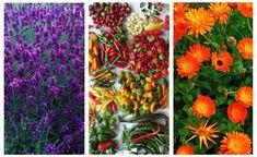 Culturi profitabile pe terenuri mici. 5 idei de afaceri agricole