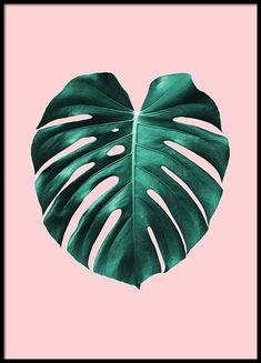 Monstera On Pink Juliste ryhmässä Julisteet / Kasviaiheet @ Desenio AB Illustration Art Dessin, Plant Illustration, Plant Background, Background Drawing, Plant Painting, Plant Drawing, Drawing Drawing, Drawing Ideas, Plant Wallpaper