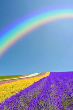 Rainbows and Lavender Fields                                                                                                                                                                                 More #LavenderFields