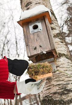 Houkuttele linnut pöntöillä pihaan | Viherpiha
