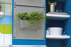 wall planters with herbs