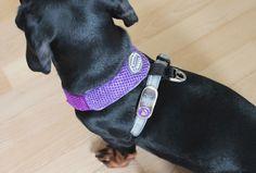 Made a purple harness for Bella.