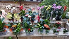 Cestas de plantas #Floristería #RamónLuque #Plantas | ramonluque.es