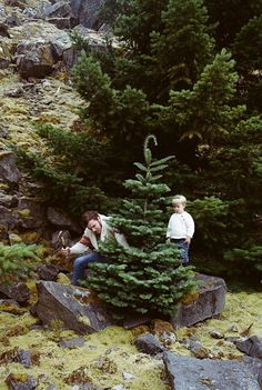 Chop down family Christmas Tree in Rocky Mountain National Forest #deartopshop