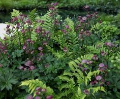 My Favorite Plant Combinations 70