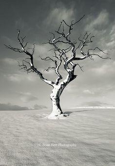 January 2013 – ~~January 2013 ~ mono, lone tree in winter, Cumbria, England by … - Modern Desert Trees, Desert Plants, Winter Szenen, Winter Trees, Tree Photography, Landscape Photography, Winter Tree Drawing, Lone Tree, Unique Trees