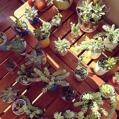 É SÁBADO! Vamos vender suculentas e cactos em um delicioso evento ao ar livre! Anote: Av. São Luís 282 República a partir de 12h30. Você vai adorar!  #oitominhocas #suculentas #cactus #plantinhas #decoracao #maisverde #vemprocentro