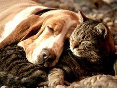 Haustiere - Hund und Katze