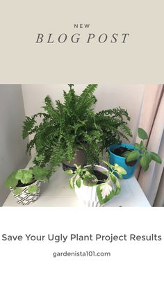 Save Your Ugly Plant Project Results-Save Plants/Save Money Easy Care Indoor Plants, Sweet Potato Plant, Boston Ferns, Potato Vines, Plant Projects, Low Maintenance Plants, Annual Plants, Grow Lights, New Leaf