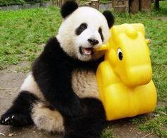 3234b763acd1 33 Best Cute Panda images