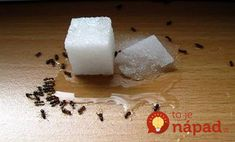 From peppermint to borax, we tested 13 natural remedies for killing ants or repelling them. Here are the best natural pest control methods to help you cope. Natural Remedies For Ants, Sugar Ants, Fee Du Logis, Get Rid Of Ants, Natural Solutions, Pest Solutions, Natural Cleaning Products, Pest Control, Home Remedies
