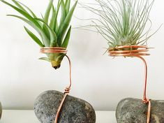 Air plant tillandsia support tillandsia support air plant
