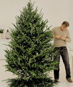 I'm awful at stringing lights!Create a beautiful glow with floral design expert Michael Walter's tips on how to string lights on a Christmas tree. Natural Christmas Tree, Live Christmas Trees, Hanging Christmas Lights, Christmas Tree Design, Xmas Lights, Beautiful Christmas Trees, Merry Little Christmas, White Christmas, Christmas Tree Ornaments