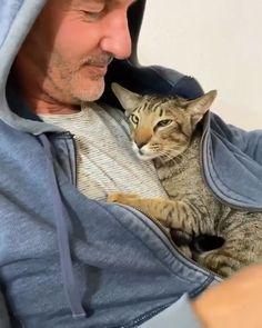 Top 5 Common Mistakes to Avoid When Bringing Home a New Cat or Dog - Funny Cute Cats, Cute Cats And Kittens, Cute Funny Animals, Beautiful Cats, Animals Beautiful, Gato Gif, Cute Animal Videos, Cute Little Animals, Animals And Pets