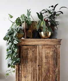 Tribute to the Monstera – tough plant with holes! Botanical Interior, Interior Plants, Coffee Table Plants, Indoor Gardening Supplies, House Plants Decor, Industrial Interiors, Inspired Homes, Modern Interior, Interior Inspiration