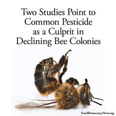 """""""The authors of both studies contend that their results raise serious questions about the use of the pesticides, known as neonicotinoids. Read more here: http://www.nytimes.com/2012/03/30/science/neocotinoid-pesticides-play-a-role-in-bees-decline-2-studies-find.html """""""
