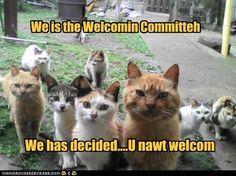 Neighborhood bullies.....