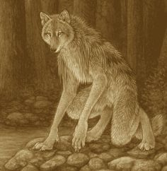 WOLF shaman i met this creture wile holidaying deep in jakarta indonesia he stick in but
