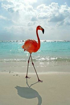 Swagger. The Flamingo is The Bahamas national bird.