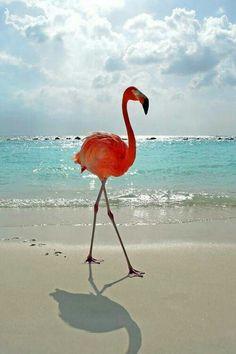 Swagger. The Flamingo is The Bahamas national bird.