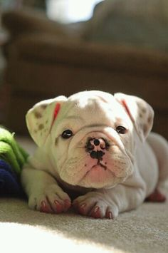 SOOOO cute..