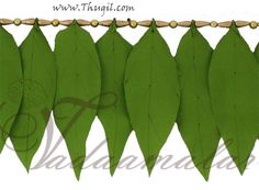 Mango lead decoration. Cloth  http://www.thugil.com/mango-leaf-design-toran-738.html