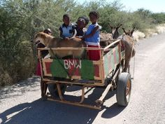 BMW Donkey Cart - #Namibia #Africa #Transport