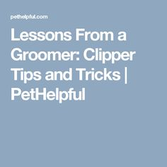 Lessons From a Groomer: Clipper Tips and Tricks | PetHelpful