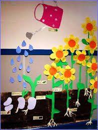 :Plant display
