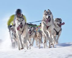 What Is the Iditarod | The Adventure Blog: Iditarod 2012: And Then There Were Three