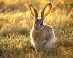 Bon Mardi - 10 images d'animaux.  Merci de vos visites sur mon site.  Bonne fin de journée et bisous.