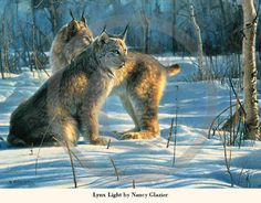 Lynx Light by Nancy Glazier - December 2013