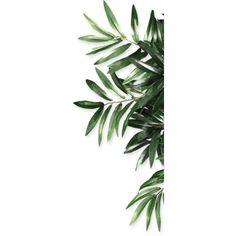 花瓣 ❤ liked on Polyvore featuring backgrounds, flowers, plants, detail and embellishment