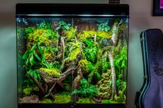 This is our enclosure for our Southern Angle Headed Dragon. Tree Frog Terrarium, Gecko Terrarium, Reptile Terrarium, Terrarium Plants, Reptile Room, Reptile Cage, Reptile Enclosure, Gecko Vivarium, Rabbit Cages