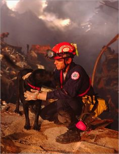 Search And Rescue dogs... http://www.thenatureanimals.com/2011/03/successful-dogs-that-would-love-to-help.html