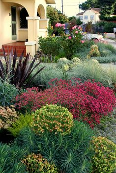 Floradora Succulent Gardening, Bungalow, Landscaping Plants, Cool Landscapes, Garden Beds, Trees To Plant, Garden Inspiration, Curb Appeal, Beautiful Gardens